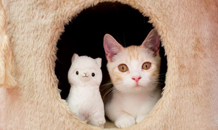 ネコで学ぶ写真の基本